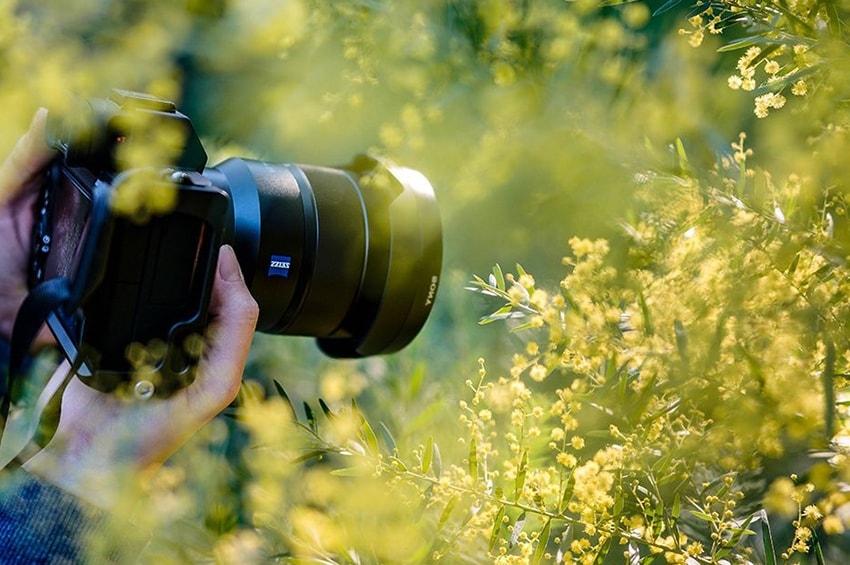 Il contest fotografico per l'Anno internazionale della salute delle piante