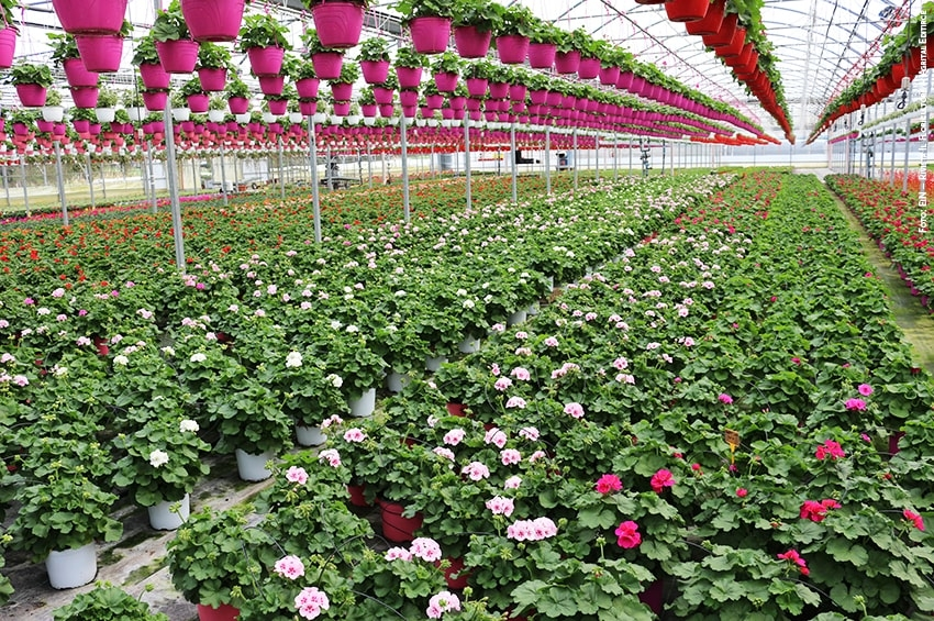Agropontino: a Myplant 2020 focus sulla filiera florovivaistica