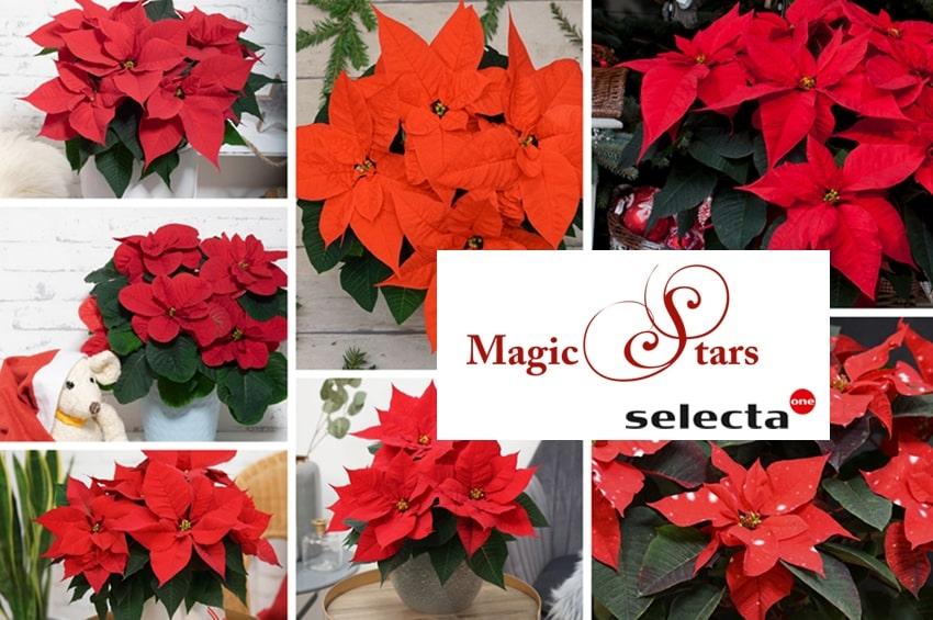 "23-24 Novembre: torna ""Magic Stars"" di Selecta one"