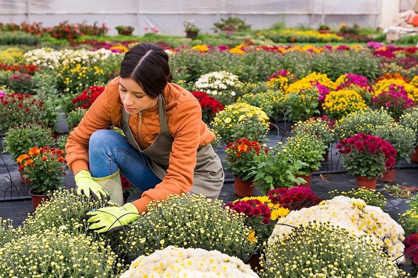 Donne in campo: al via mutui a tasso zero fino a 300mila euro per imprenditrici agricole