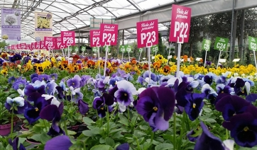 "Garden center: torna ""100 sfumature di viole"""