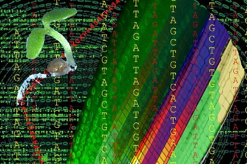 Un algoritmo per capire le piante
