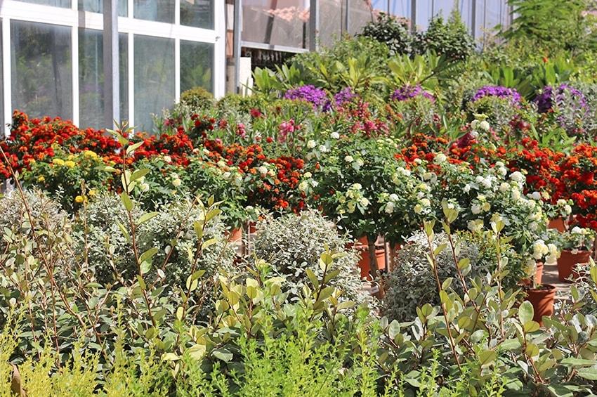 Coronavirus, piante e fiori: il Governo permette l'apertura dei punti vendita, le Regioni replicano in ordine sparso