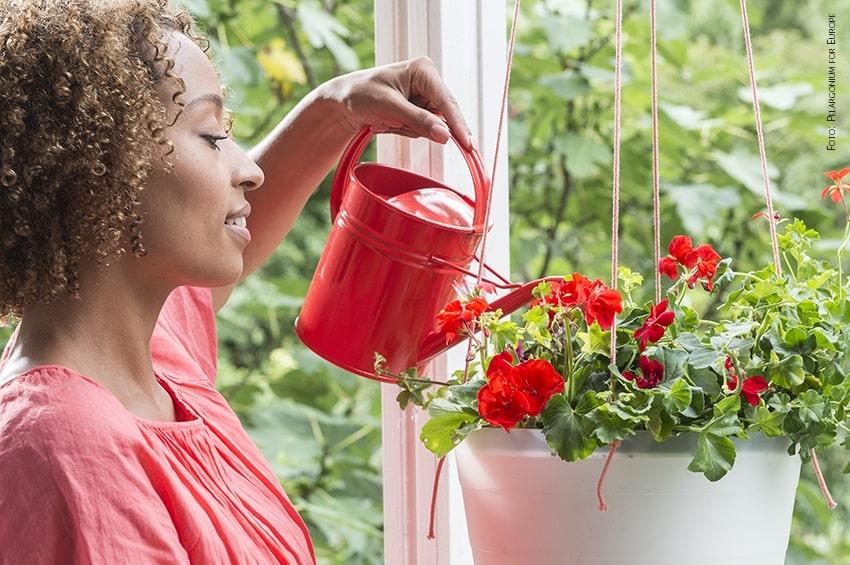 Meno acqua potabile, più acqua piovana: l'iniziativa della Royal Horticultural Society per giardini e terrazzi sostenibili
